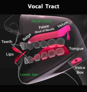 vocal_tract